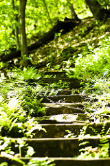 The Shire is beyond these steps.