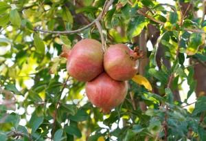 1st Corinthians 15 Firstfruits